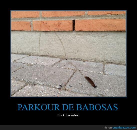 babosas,cambiar,dirección,pared,parkour