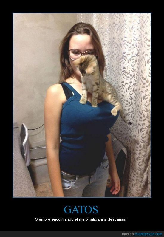 chica,gafas,gato,pecho,posar