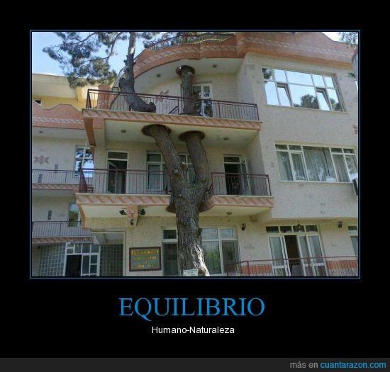arbol,edificio,equilibrio,humano,impresionante,naturaleza