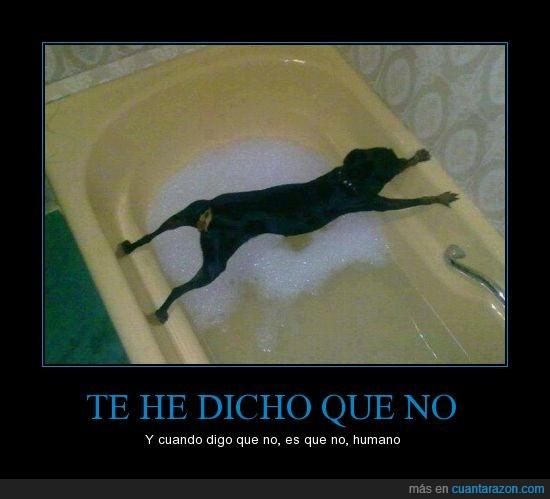 baño,Ducha,estirar,evitar,meter,patas,perro,respuesta