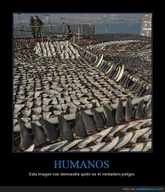 Aletas de tiburon,humanos=peligro real,masacre,realidad