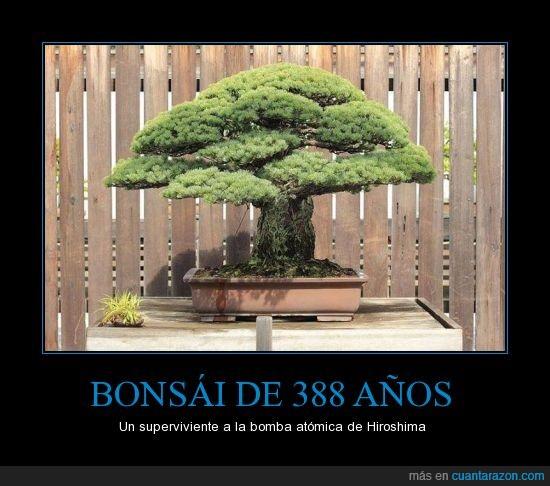 años,atomica,bomba,bonsai,foto,guerra,hiroshima,sobrevivió
