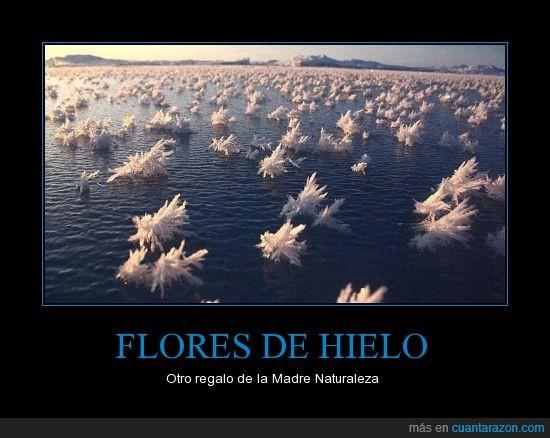 agua,Flores,frio,hielo,lago,madre naturaleza,mar
