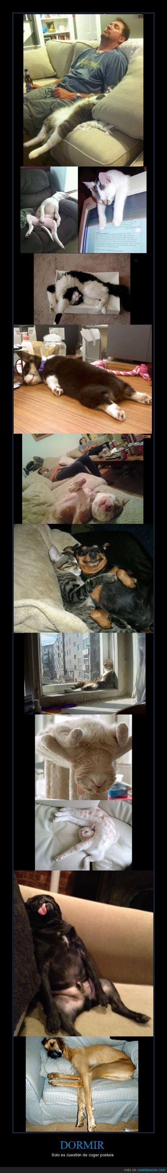 dormir,gatos,perros,pose,posición,siesta,sueño