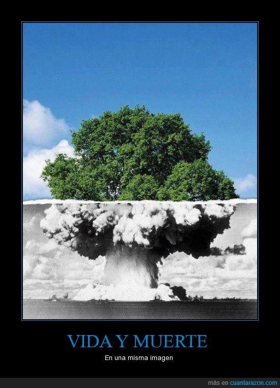 árbol,bomba,explosion,muerte,vida