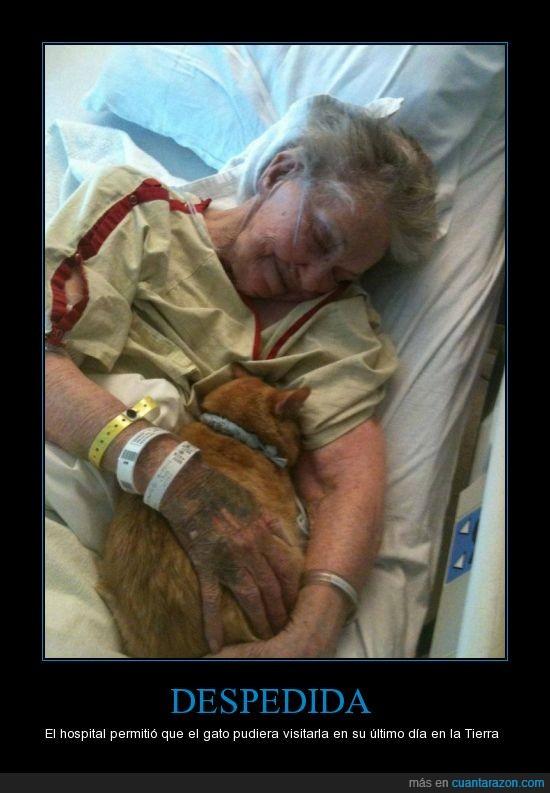 amor,conmovedor,despedida,dia,gato,hospital,mejores amigos,muerte,ultimo