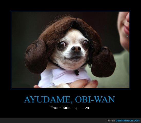 chihuahua,moños,peluca,perro,princesa leia,star wars