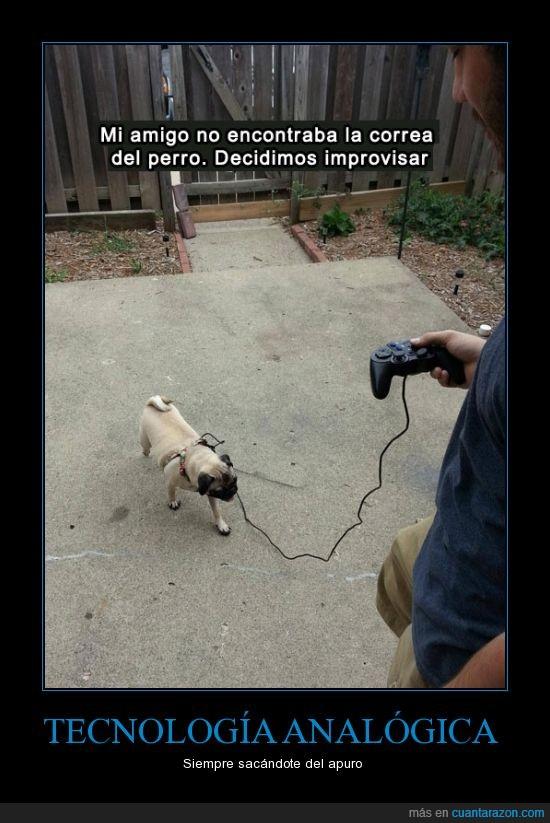 cable,consola,mando,pasear,perro,pug,videojuego