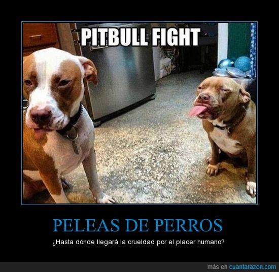 crueldad,pelea,perros,se les nota muy violentos,violencia