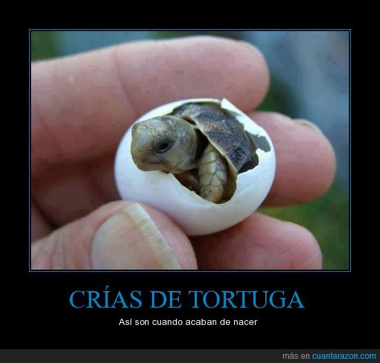 animal,crias,hermoso,huevo,naturaleza,tortuga