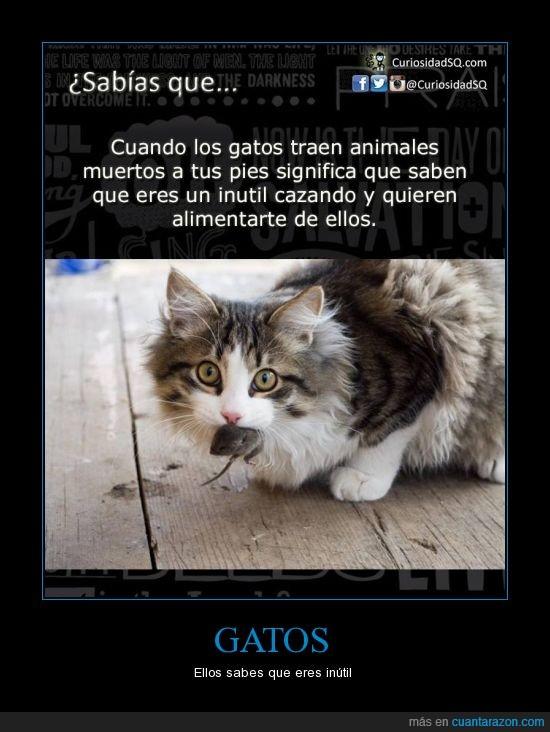 el que lea esto,gatos,inutil,traer