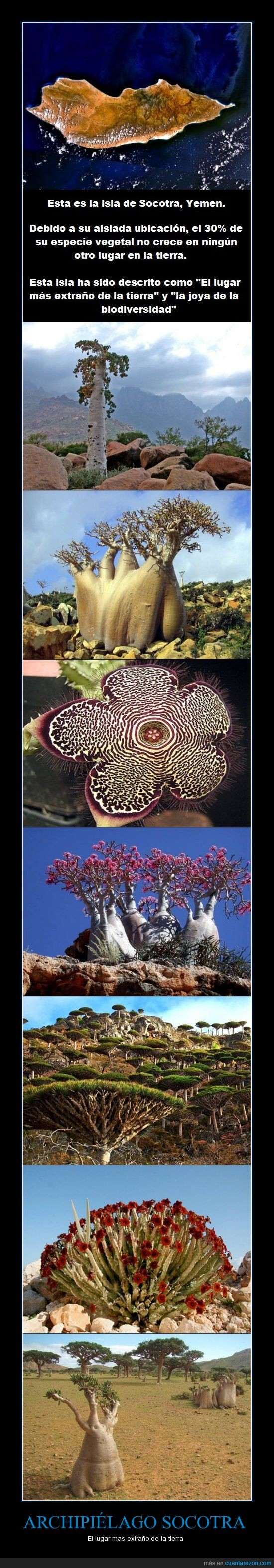 archipiélago,extraño,isla,Tim Burton vive ahí,vegetales extraños