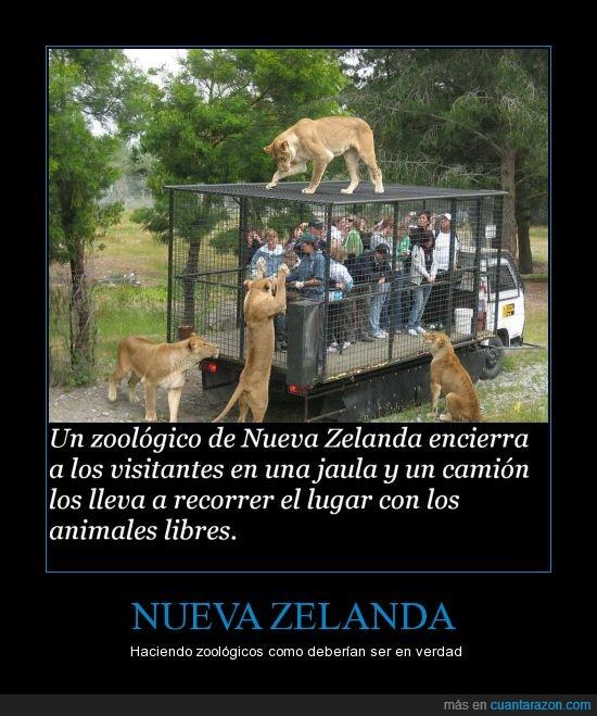 camion,jaula,leones,mundo paralelo,Nueva zelanda,zoológico