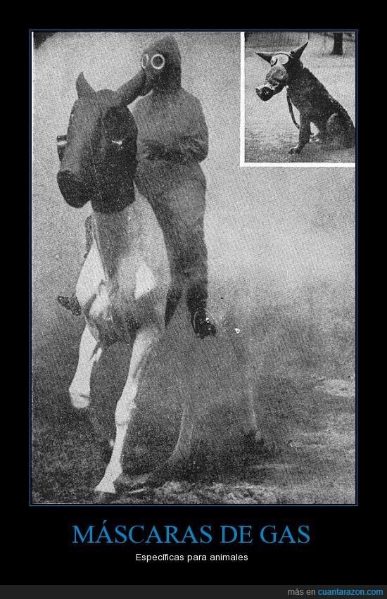 animales,caballo,mascara de gas,pereo