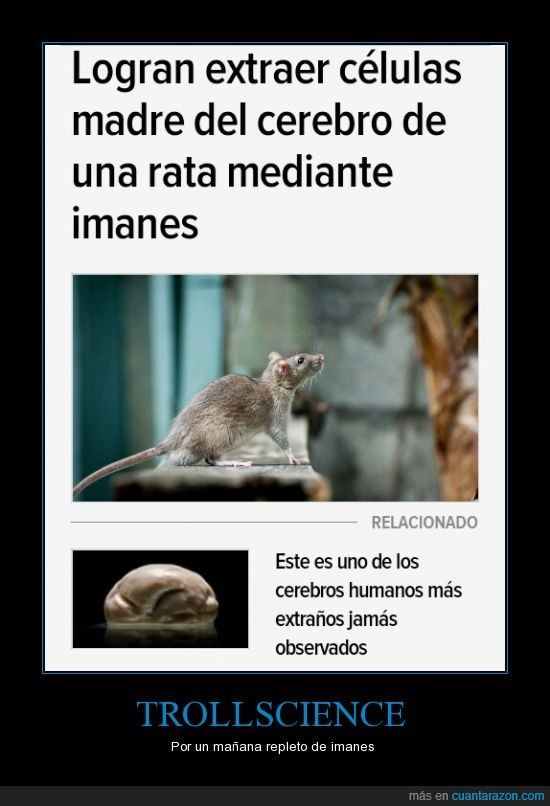 animales,imanes,neuronas,ratas,science,troll