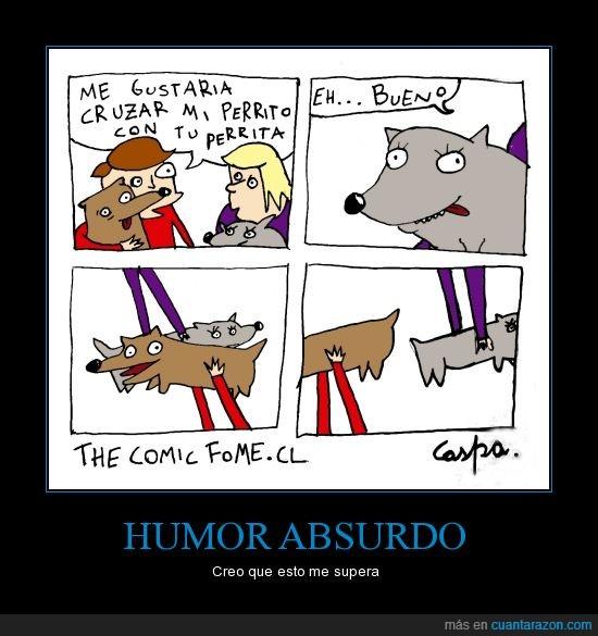 absurdo,cruzar,humor,mascota,perro