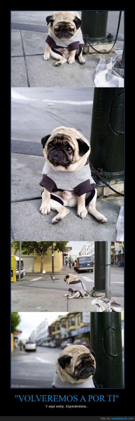 abandonar,atado,esperar,perro,pug,triste