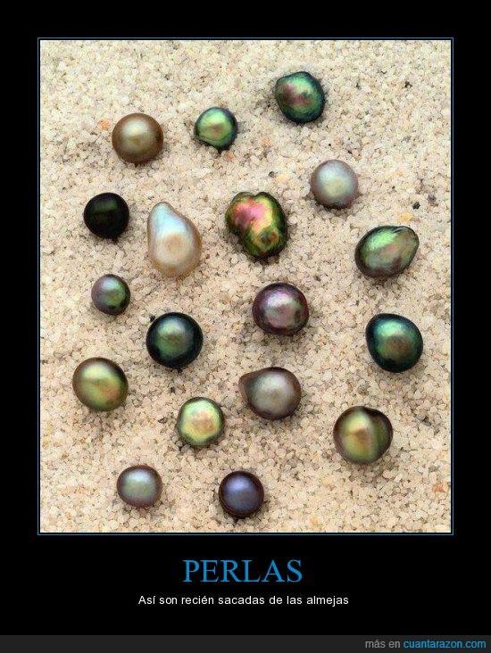 almejas,bonito,color,mar,perlas,sacadas
