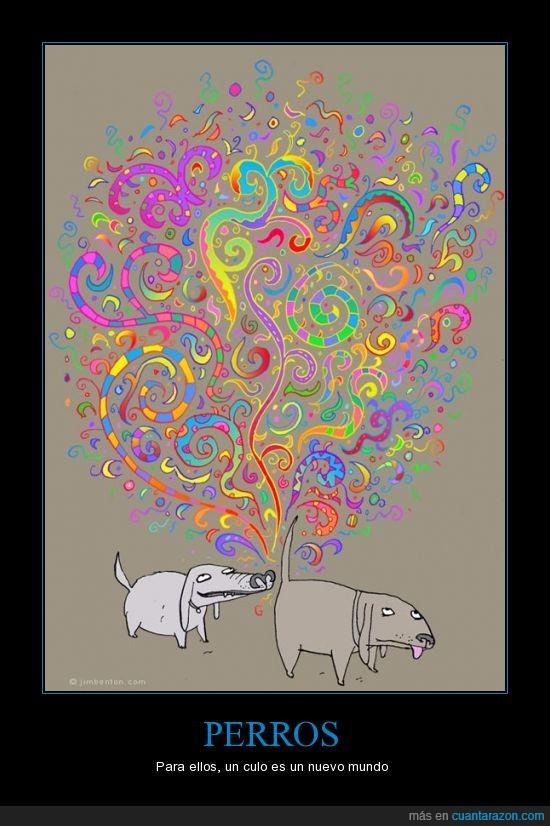 color,colores,fantasia,mundo,oler,perros,universo