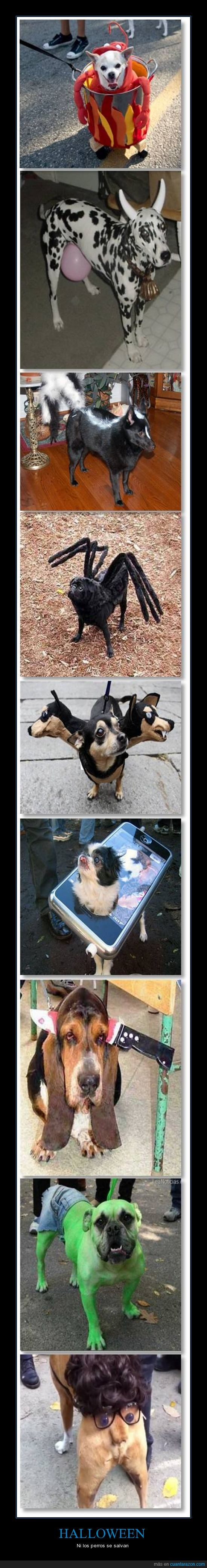Disfraz,Halloween,Mascotas,Perro