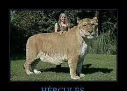 Enlace a HÉRCULES
