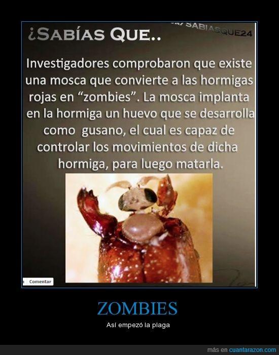 comer,cuerpo,hormigas,mover,muerto,zombies