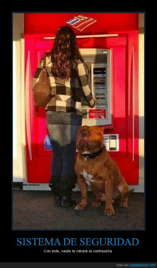 atm,banco,cajero,dinero,guardian,perrazo,perro,robar,sacar,seguridad