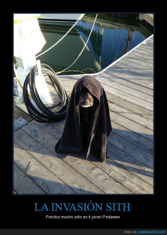 barco,muelle,perro,sith,toalla