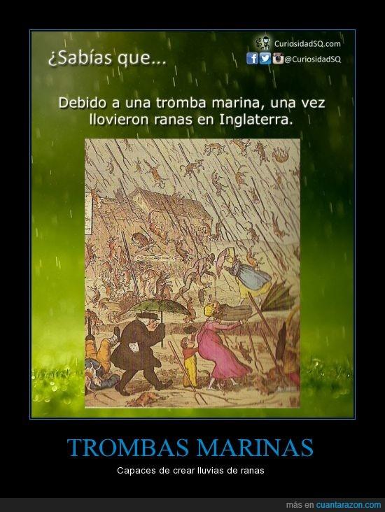 caer,cielo,Inglaterra,llover,lluvia,ranas,tromba marina