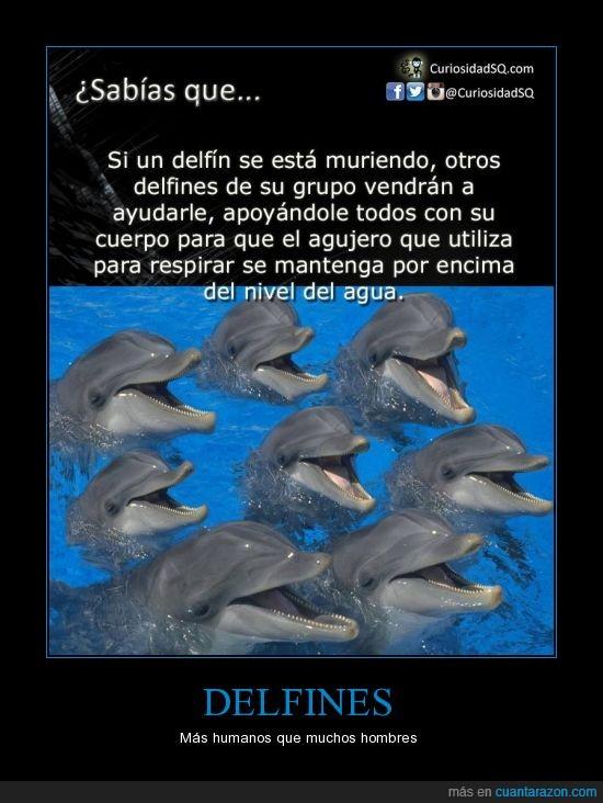 agua,ayudar,delfin,muerto,respirar,subir