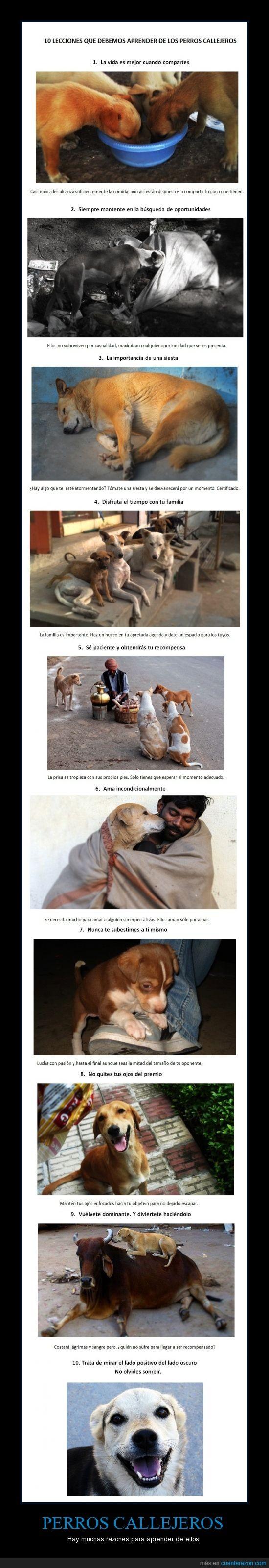 abandonados,lecciones,perros callejeros,reflexiones