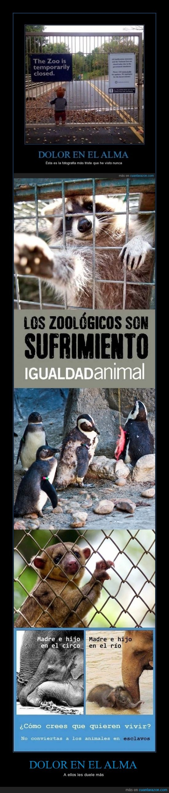 animales,elefante,sufriendo,zoologico