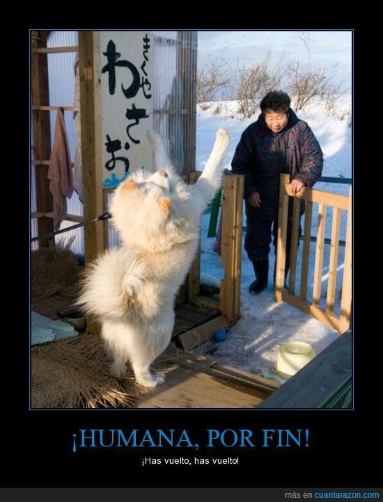 amigos,compañia,frio,japon,nieve,perros,Te vas 5 min y se alegran