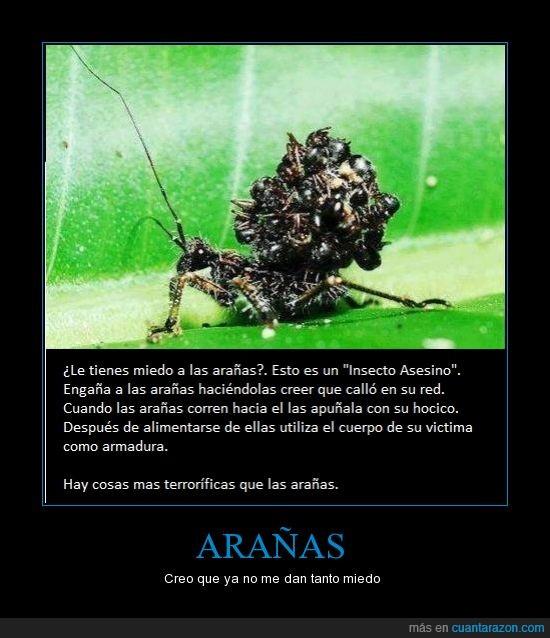 .,arañas,asesino,cadaver,miedo,naturaleza
