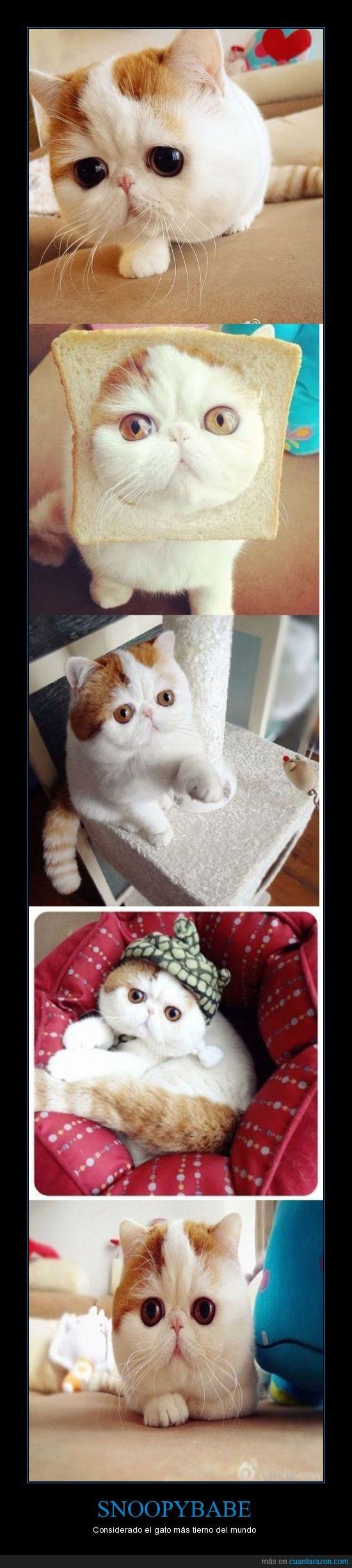 años,china,dos,gato,mas,mundo,tiene,tierno