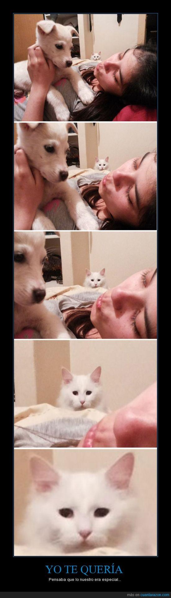 Gato,humano,mirar,perro,triste