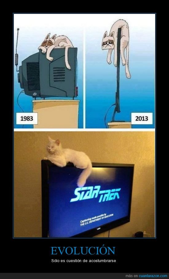 dormir,encima,evolución,gato,pantalla,pelicula,plana,star trek,televisión