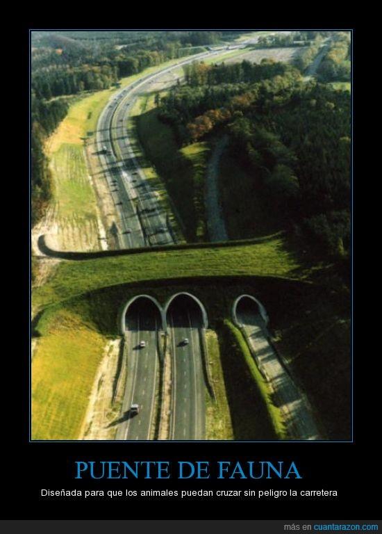animales,autos,carretera,naturaleza,puente