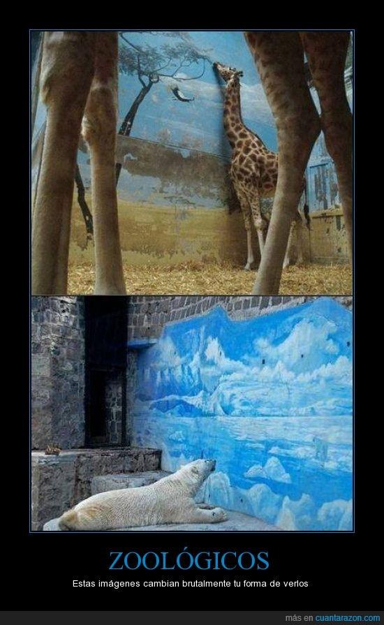 carcel,crueles,Jirafa,mirar,Oso,paisaje,pared,vida,Zoo