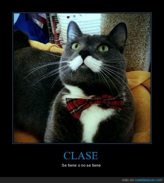bigote,forma,gato,like a sir,nacer