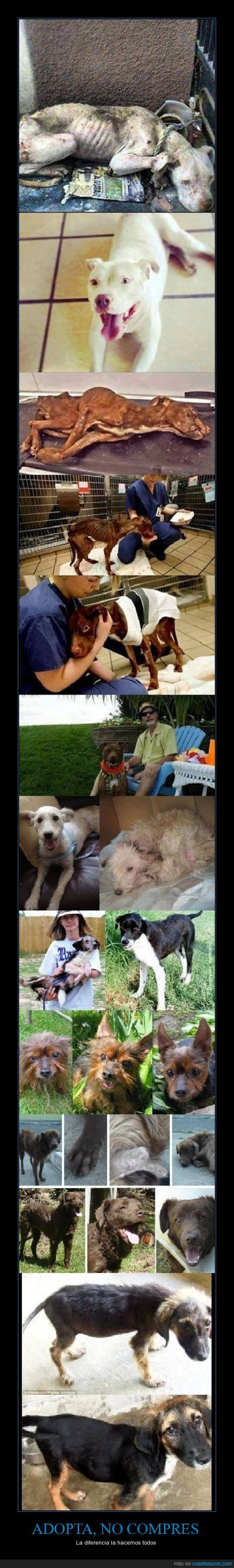 Adoptar,antes y despues,comprar,perros,rescatados,todos