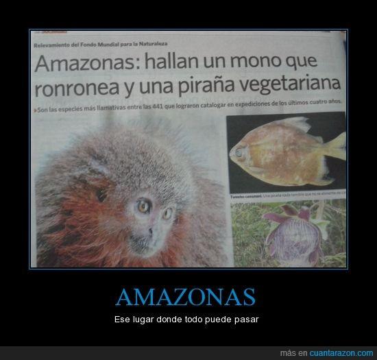 amazonas,comer,mono,piraña,ronronea,vegetariana
