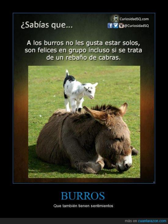 alone,burro,cabra,compañia,ever,for,junto,sentimientos,soledad