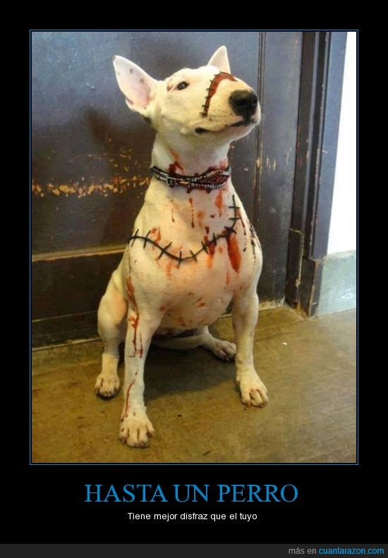 bodypaint,bull terrier,cicatriz,Halloween,Perro,sangre