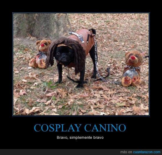 carlino,cosplay,Michonne,perro,pug,rastas,walking dead