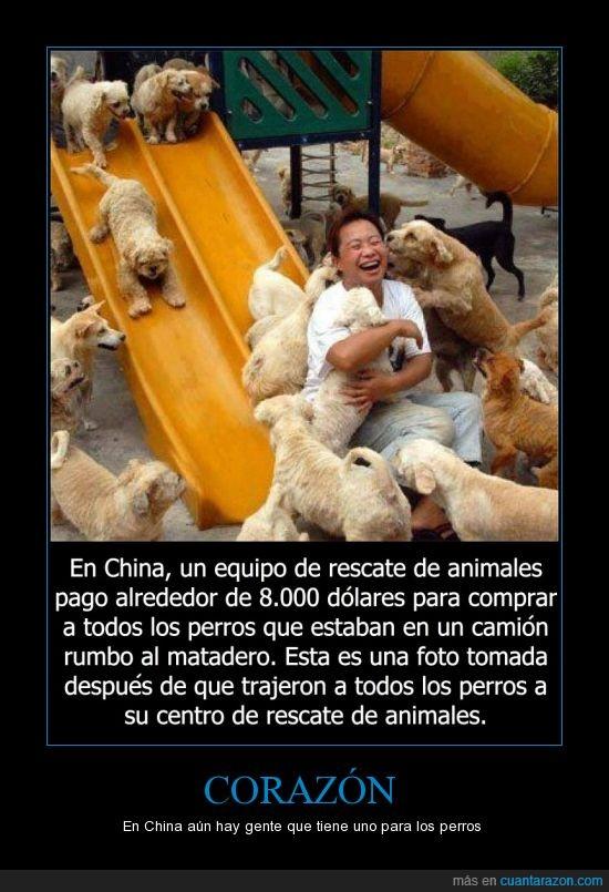 acogida,animales,ayudar,china,comprar,matadera,perro,salvar