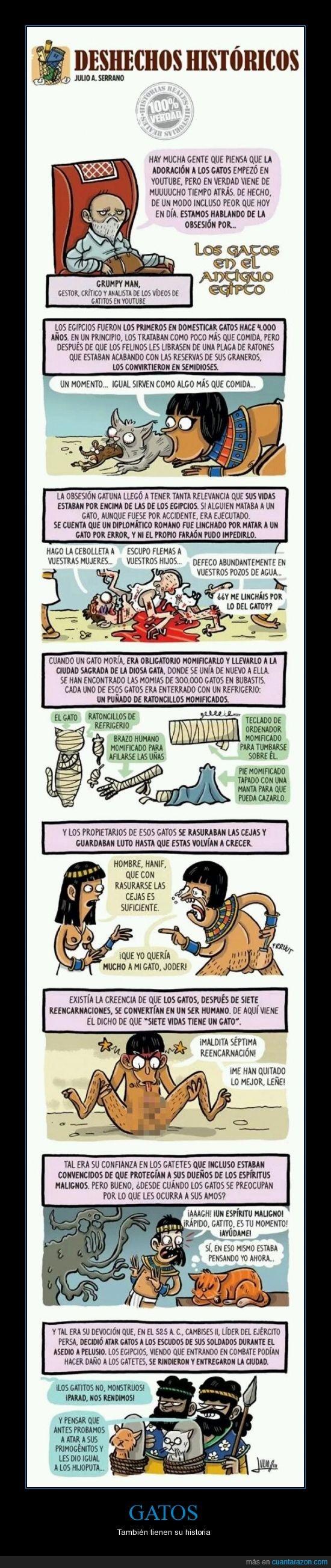 adoracion,egipto,gatos,historia