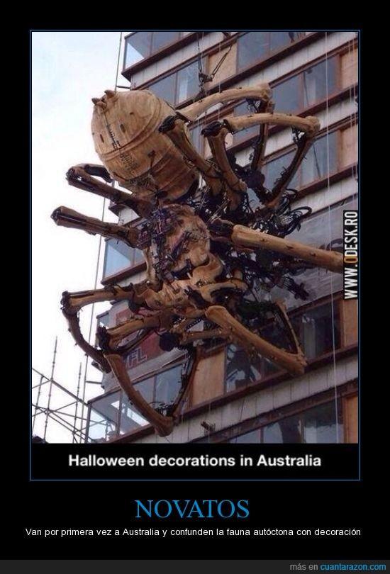 animales,araña,araña gigante,Australia,decoracion,gigante,halloween,yo no me acerco por si acaso