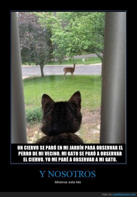 ciervo,foto,gato,nosotros,observar,perro,ver