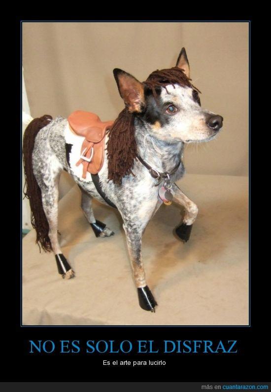 caballo,fijarse dos veces,halloween,perro